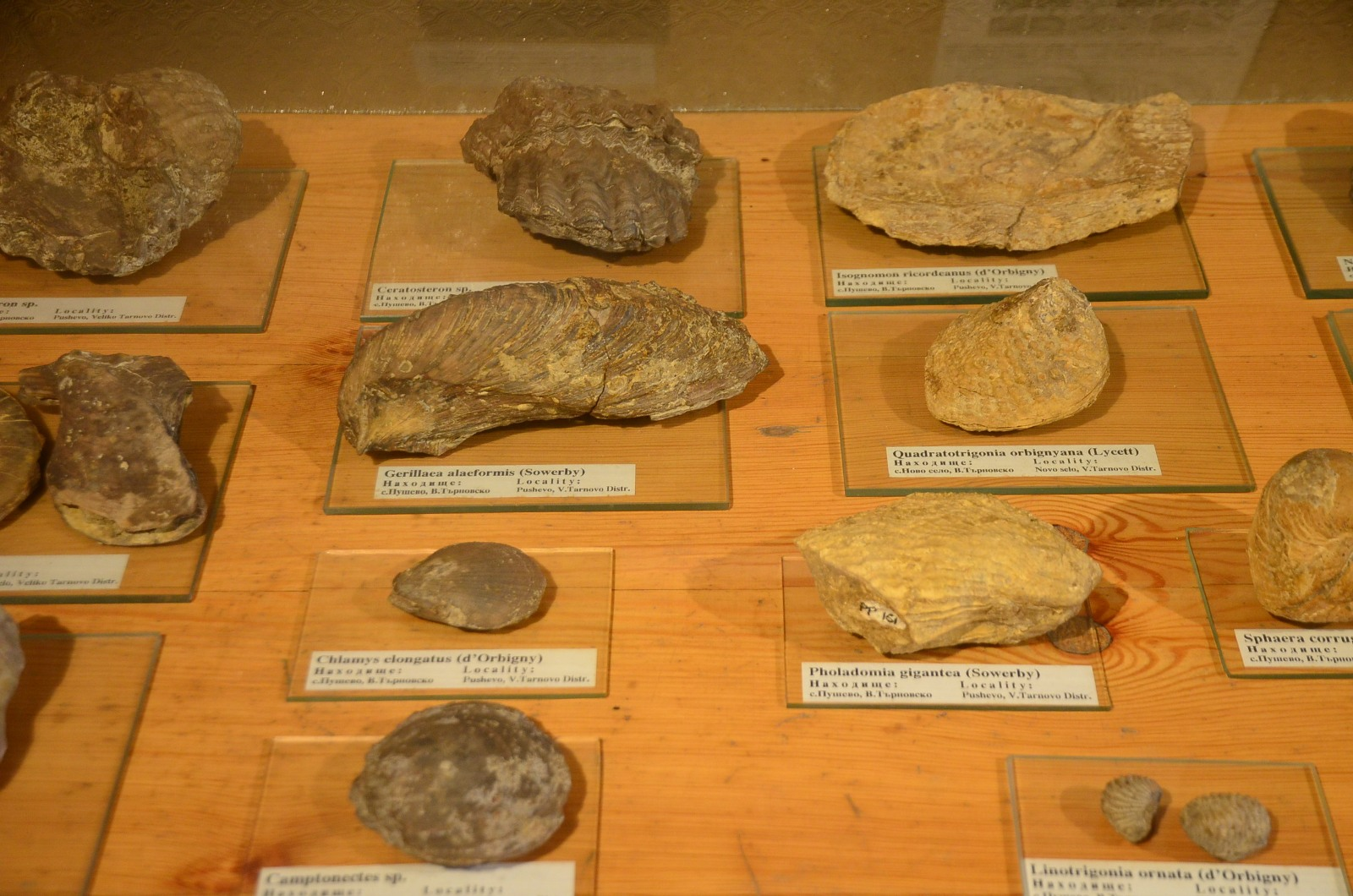 Elena - Attraction Museum of Paleontology - Elena - Picture 3